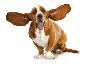Hund Agria Djurförsäkring